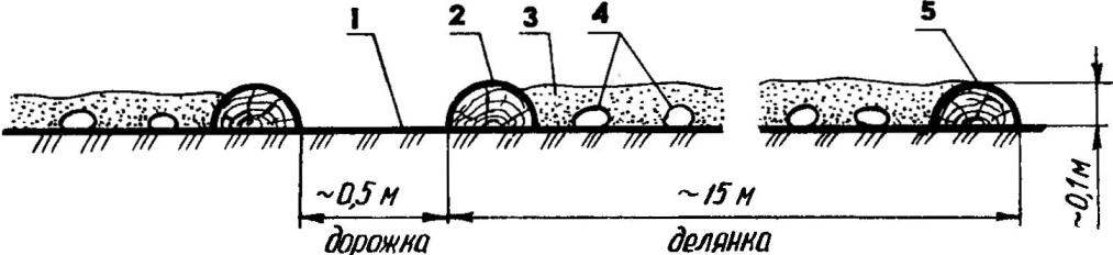 The scheme of arrangement of allotments for growing of early potatoes