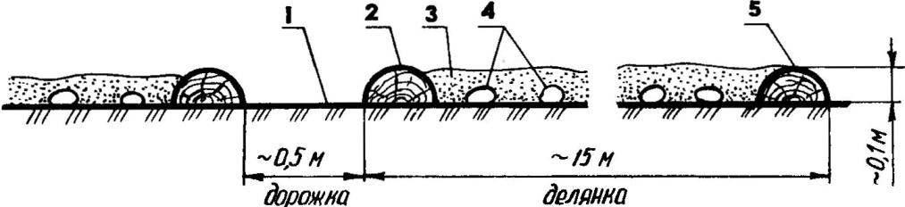 Схема обустройства делянки для выращивания раннего картофеля