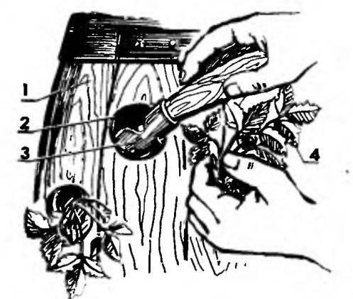 Transplanting into a vertical garden