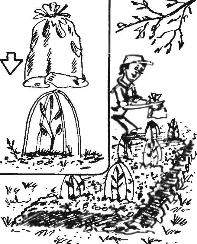 GREENHOUSE-INDIVIDUAL
