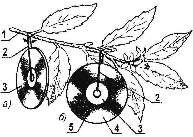 Старые, ущербные компакт-диски в качестве отпугивателей (а) птиц световыми бликами от зеркальной поверхности и как липкие ловушки (б) для вредных насекомых, привлеченных специальным клейким слоем, который заранее наносится на обратную (рекламную) сторону подложки