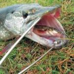 Советы от Клевой Рыбалки