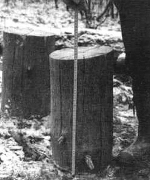 Высота заготовки должна быть равна примерно двум ее диаметрам. Но более 600 мм делать ее не имеет смысла - «свечка» разрушится