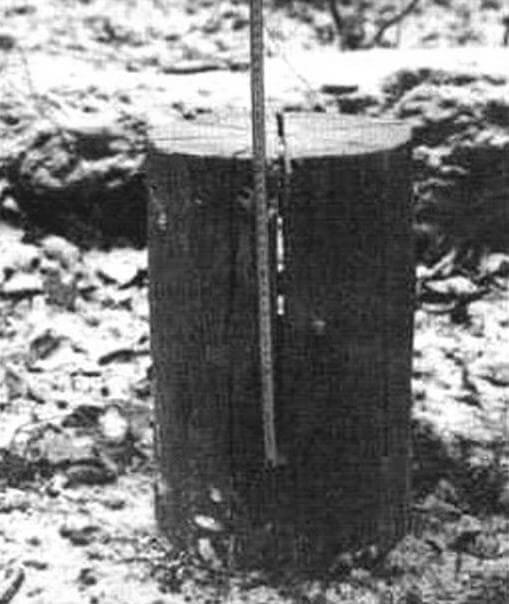 Непропиленное основание снизу должно быть не менее 100 -150 мм