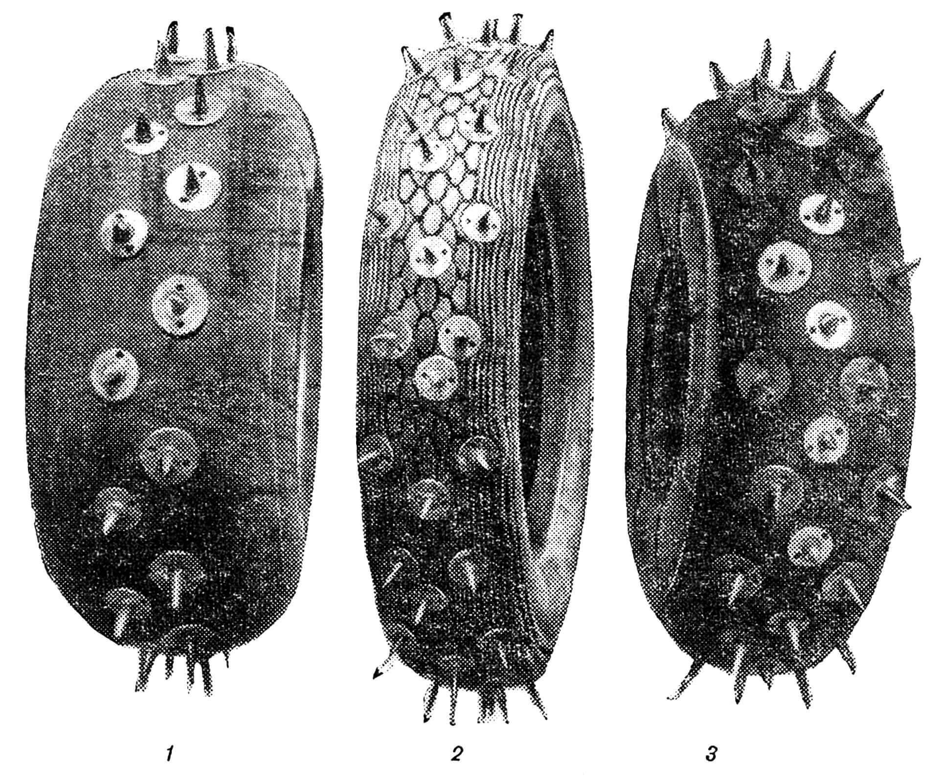 РИС. 1. КОЛЕСА КАРТА: 1 — переднее колесо (ø 300 мм); 2 — заднее колесо ( ø 460 мм); 3 — заднее колесо (ø 300 мм).