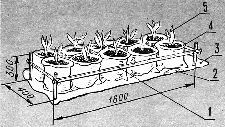 Горизонтальная полиэтиленовая «грядка»: 1 — каркас реечный (из отрезков сосновой или березовой рейки сечением 25x25 мм), 2 — основа поддона (рамочная конструкция из «подручного» материала), 3 — полиэтиленовая пленка поддона, 4 — полиэтиленовые пакеты с почвой (10—20 шт.), 5 — взошедшие растения или рассада.